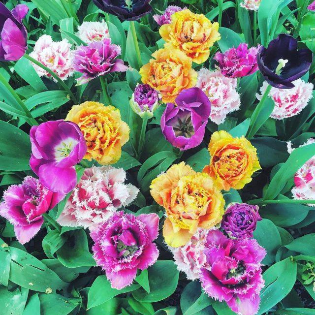 Ma come fan presto ad appassire le rose  lovehellip
