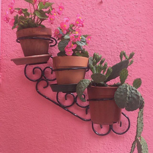 PinkMyTrip ovvero pi rosa e fiori per tutti  lifewelltravelledhellip